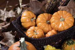 Zucche e cereale per la decorazione di ringraziamento Fotografie Stock