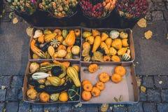 Zucche e zucche di autunno Fotografia Stock