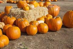 Zucche e fieno arancio nella regolazione rustica di caduta Fotografia Stock
