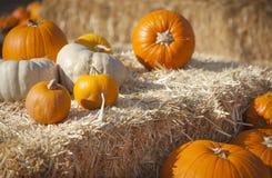 Zucche e fieno arancio nella regolazione rustica di caduta Immagini Stock