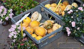 Zucche e fiori al mercato di strada aperto immagine stock