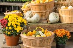 Zucche e fiori nell'esposizione di caduta Fotografia Stock Libera da Diritti