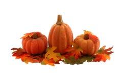 Zucche e fogli - decorazione di ringraziamento Fotografia Stock