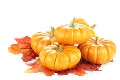 Zucche e fogli di autunno Immagini Stock Libere da Diritti