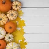 Zucche e foglie di acero immagini stock libere da diritti