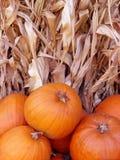 Zucche e gambo del cereale Fotografie Stock