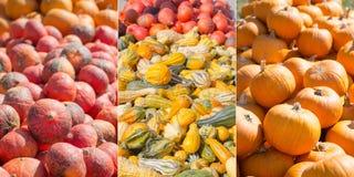 Zucche e zucche nelle forme differenti fotografie stock