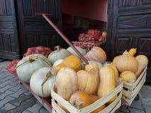 Zucche e patate pronte per farmers& x27; mercato Fotografie Stock