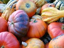 Zucche e raccolto IV della zucca Fotografie Stock