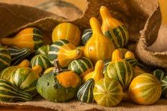 Zucche e zucche su tela da imballaggio Fotografia Stock Libera da Diritti
