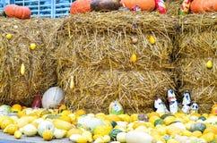 Zucche e varie verdure, sulle balle di paglia Immagini Stock