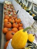 Zucche e zucca di caduta in oro, arancio e giallo immagine stock