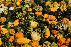 Zucche e zucche ornamentali Fotografia Stock