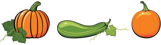 Zucche e zucchini Fotografie Stock Libere da Diritti