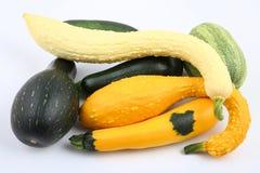 Zucche e zucchini Fotografia Stock