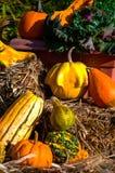 Zucche ed altra della zucca verdure di caduta Immagine Stock Libera da Diritti