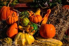 Zucche ed altra della zucca verdure di caduta Immagini Stock