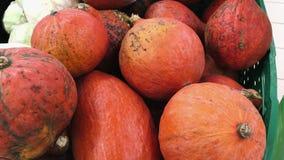 Zucche fresche dell'Hokkaido al mercato video d archivio