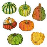 Zucche, Halloween, verdura Illustrazione di Stock