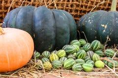 Zucche mature, giallo, patissons arancio a strisce e piccoli verdi della zucca di autunno con i pomodori ciliegia, erba asciutta  fotografie stock