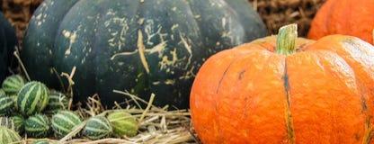 Zucche mature, giallo, patissons arancio a strisce e piccoli verdi della zucca di autunno con i pomodori ciliegia, erba asciutta  immagini stock