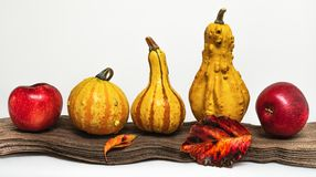 Zucche, mele e foglie di autunno fotografia stock libera da diritti