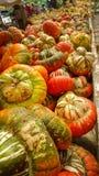 Zucche multicolori sulla tavola di legno al mercato dell'agricoltore Fotografia Stock