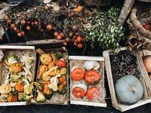 Zucche nei colori differenti Fotografie Stock