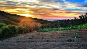 Zucche nel tramonto immagine stock