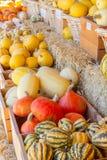 Zucche nella caduta Fotografia Stock