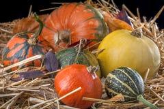 Zucche nella paglia Fotografie Stock