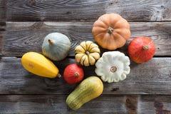 Zucche organiche variopinte, zucche e pattypans per agricoltura sostenibile della cucurbitacea Immagine Stock Libera da Diritti