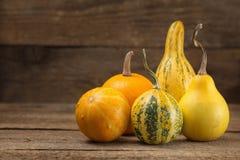 Zucche ornamentali assortite Fotografia Stock Libera da Diritti