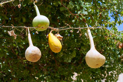 Zucche ornamentali che appendono su una linea Fotografia Stock Libera da Diritti