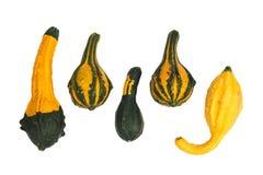 Zucche ornamentali isolate Fotografia Stock