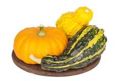 Zucche ornamentali variopinte e zucche su backgr bianco Fotografie Stock Libere da Diritti