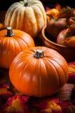 Zucche per il ringraziamento e Halloween Fotografia Stock