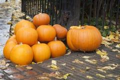 Zucche per vendita di Halloween nella via Fotografia Stock Libera da Diritti