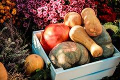 zucche pronte per le feste al mercato locale dell'azienda agricola Fotografie Stock