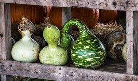 Zucche raccolte ad una toppa della zucca, Gainesville, GA, U.S.A. fotografie stock libere da diritti