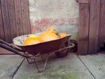 Zucche raccolte in carriola Immagine Stock