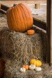Zucche raccolte da una toppa della zucca, Gainesville, GA, U.S.A. immagine stock libera da diritti