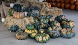 Zucche raccolte da una toppa della zucca, Gainesville, GA, U.S.A. immagini stock libere da diritti