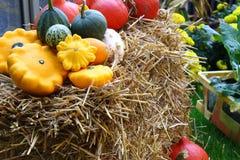 Zucche reali in giardino su un fieno Immagini Stock