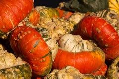 Zucche su esposizione per Halloween, alimento o le decorazioni Fotografia Stock Libera da Diritti