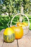 Zucche sulla tavola di legno nel giardino Immagini Stock