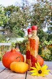 Zucche sulla tavola di legno nel giardino Immagini Stock Libere da Diritti