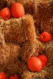Zucche sulle balle della paglia Immagine Stock Libera da Diritti