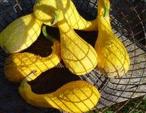 zucche in un canestro Fotografie Stock