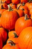 Zucche un giorno dell'autunno in Groton, Massachusetts, la contea di Middlesex, Stati Uniti Caduta della Nuova Inghilterra immagine stock libera da diritti